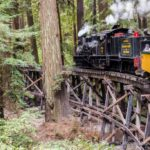 Roaring Camp & Big Trees Railroad: Riding a Steam Engine Through the Redwoods