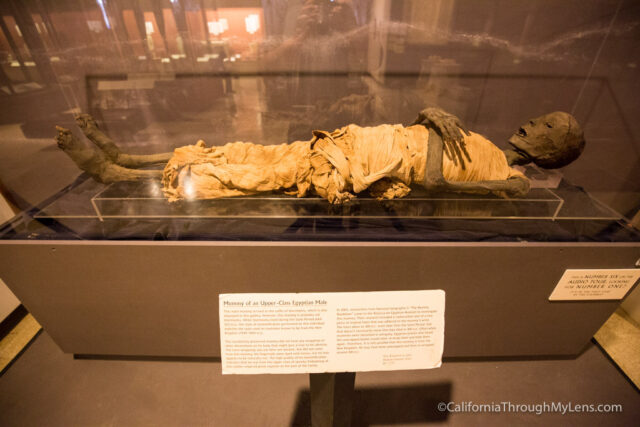 egyptian museum-13