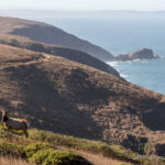 Tomales Point Hike: Seeing Tule Elk in Point Reyes National Seashore