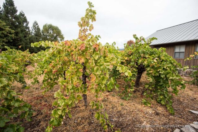 madrone-winery-1