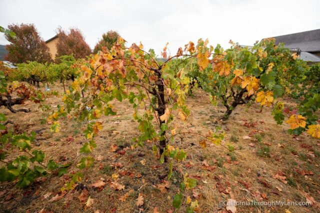 madrone-winery-4