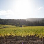 Sonoma City Guide: Wine, Restaurants, History & Hiking
