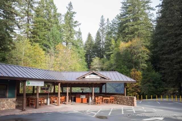 armstrong-redwoods-1