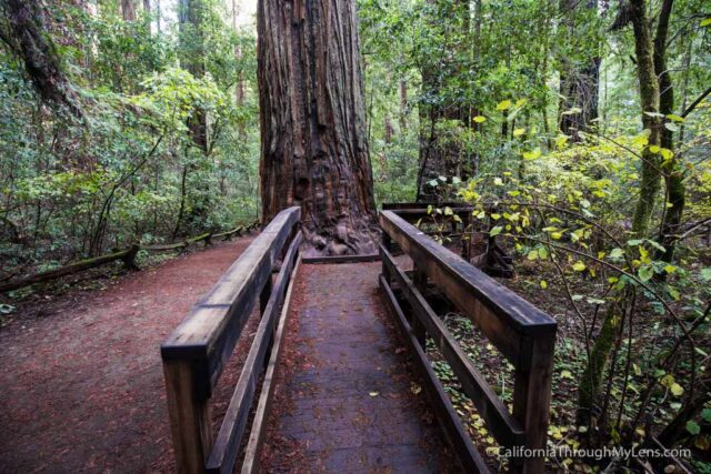 armstrong-redwoods-10
