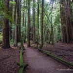 Armstrong Redwoods State Natural Reserve in Guerneville
