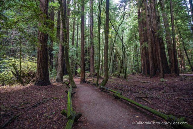 armstrong-redwoods-4