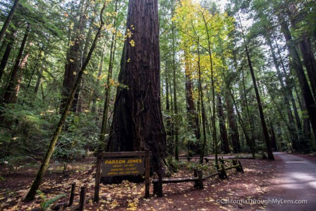 armstrong-redwoods-6
