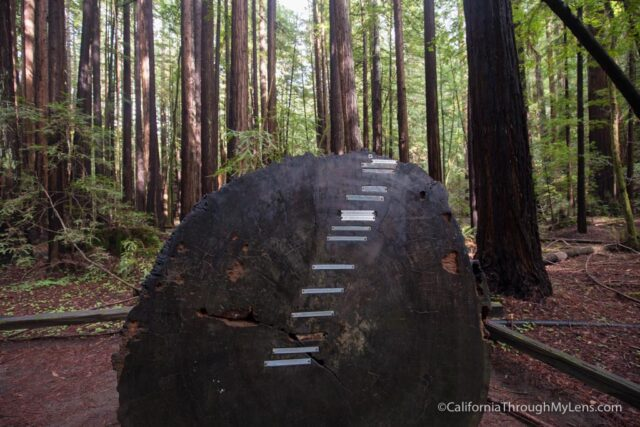 armstrong-redwoods-7