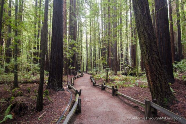 The Ten Best Redwood Groves In California California Through My Lens