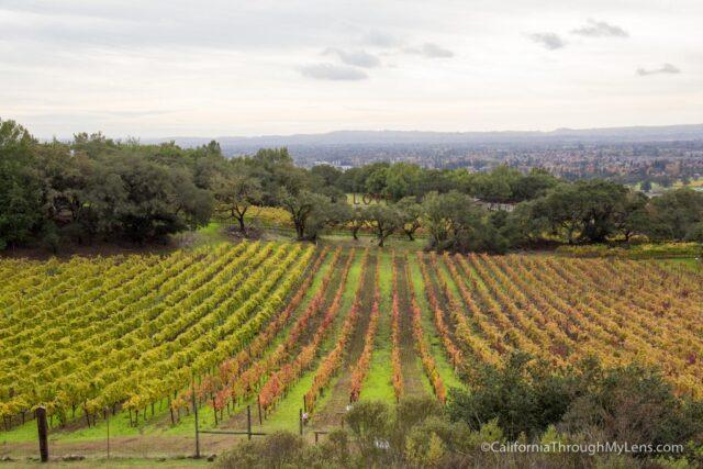 paradise-ridge-winery-1