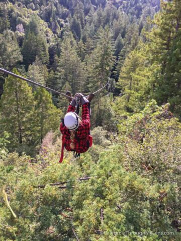 Ziplining In The Redwoods With Sonoma Canopy Tours