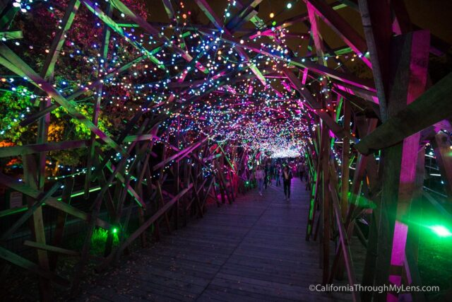 la-zoo-lights-18