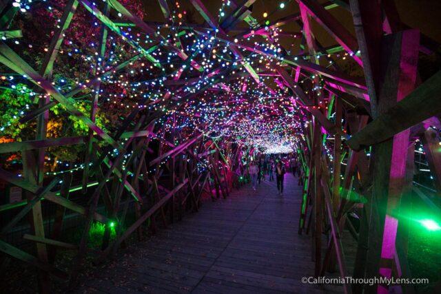 La Zoo Lights 18