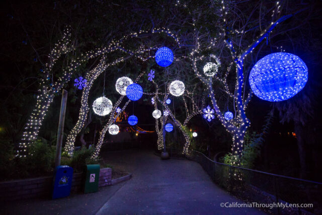 la zoo lights 20 - Christmas Lights At The Zoo