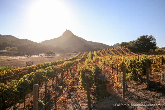 malibu-wine-hikes-20