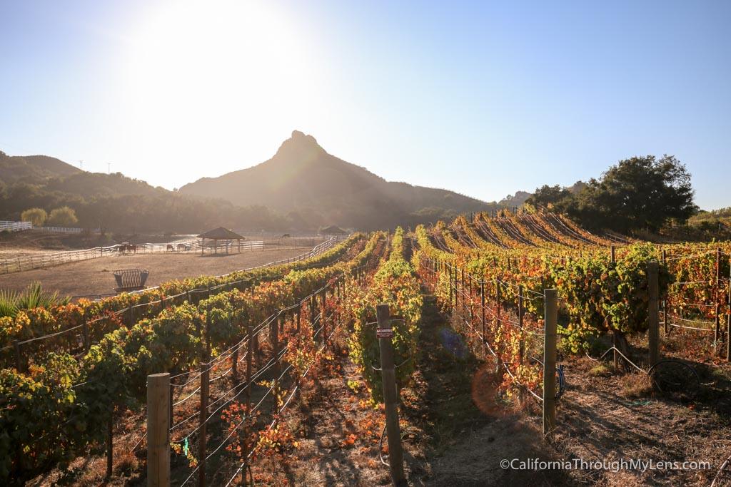 Malibu Wine Hikes Meeting Stanley The Giraffe At