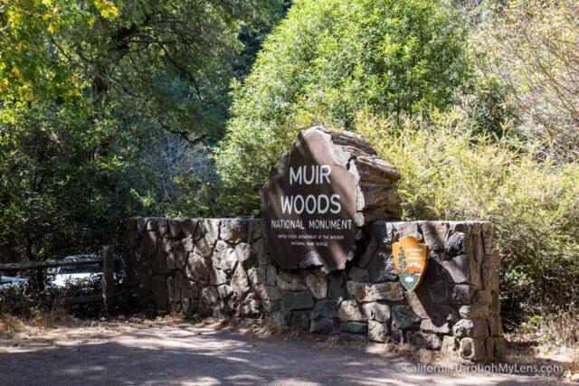 muir-woods-1
