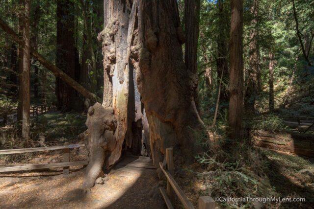 muir-woods-20