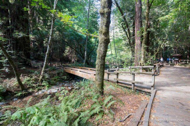 muir-woods-4