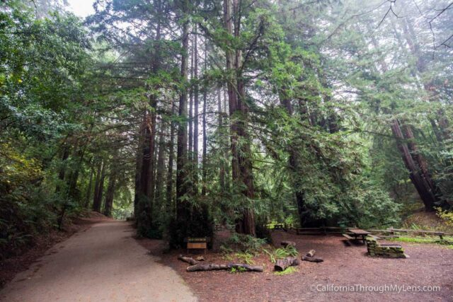 redwood-regional-park-stream-trail-15