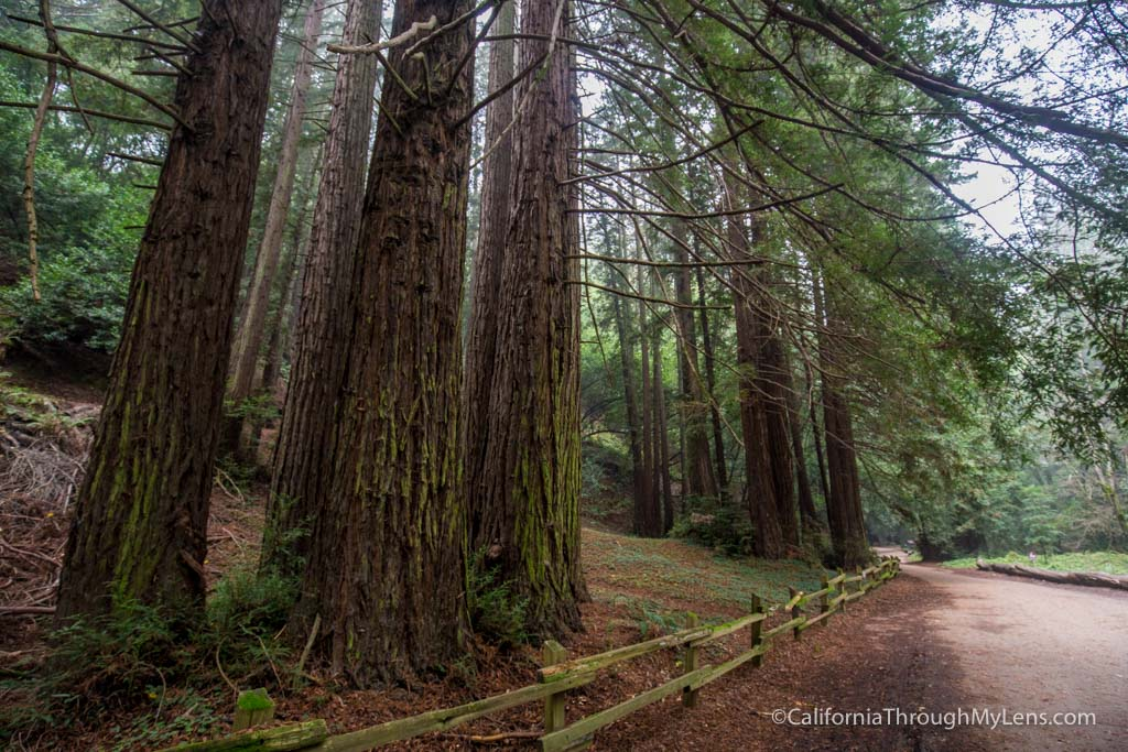 Redwood Regional Park Stream Trail In Oakland California