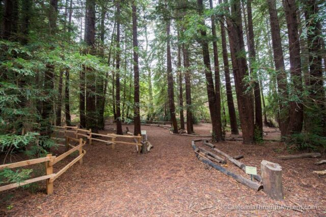 redwood-regional-park-stream-trail-2
