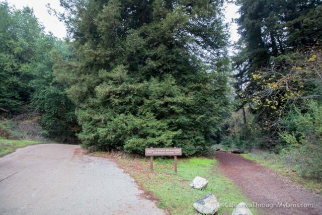redwood-regional-park-stream-trail-5