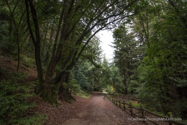 redwood-regional-park-stream-trail-9