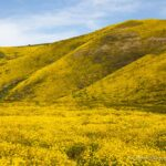 Carrizo Plain National Monument: Soda Lake, Finding Wildflowers & Exploring the Park