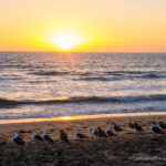24 Hours in Torrance Itinerary: Restaurants, Beaches, Movie Locations & Malls