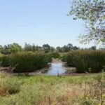 Madrona Marsh Preserve Hike in Torrance