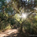 Westwood Hills Park: Hiking in Downtown Napa