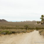 Geology Tour Road: Joshua Tree's Easiest 4×4 Road