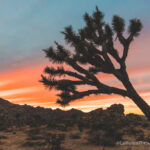 15 Places to Explore in Joshua Tree National Park