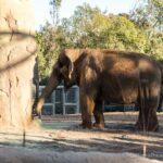 San Diego Zoo in Balboa Park