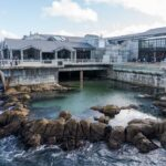 Monterey Bay Aquarium: One of the Best Aquariums in the World