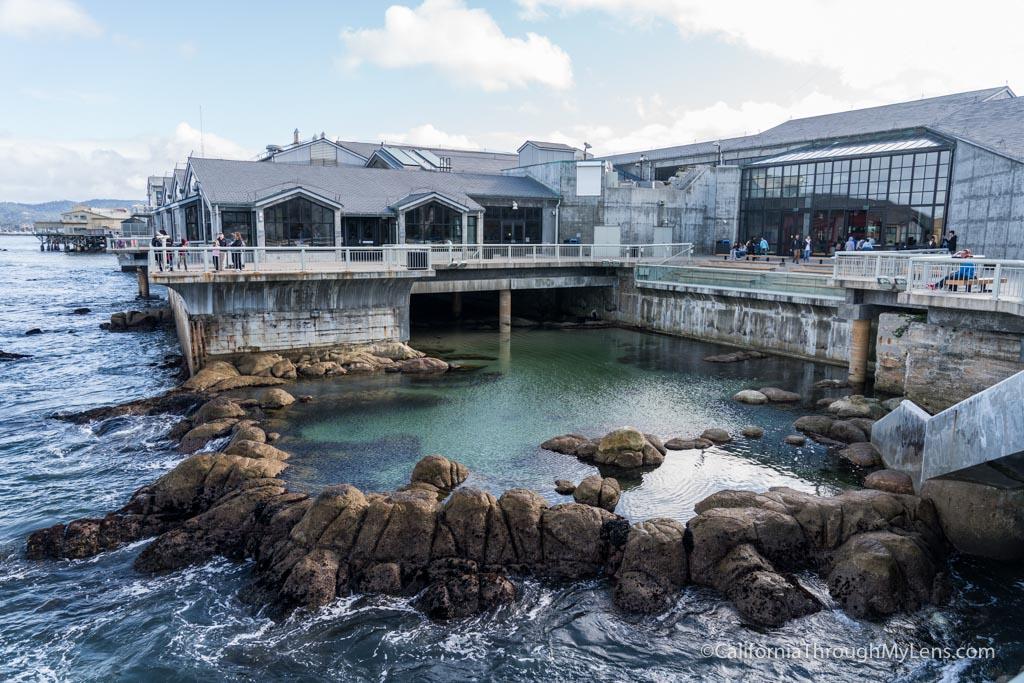 Monterey Bay Aquarium Jellyfish Tank