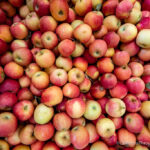 Apple Hill: Four Spots to Visit in the Fall