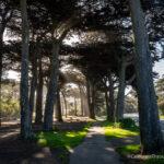 Golden Gate Park: Explore of the Best Spots in San Francisco's Famous Park