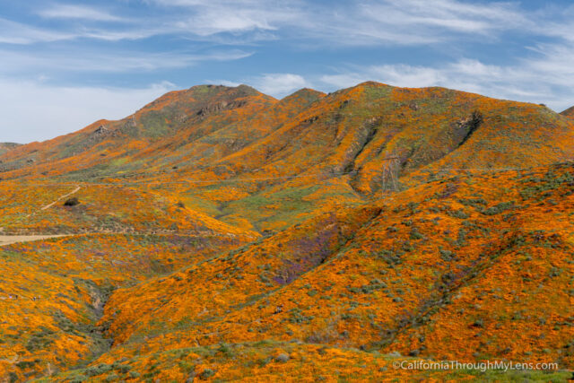 Walker Canyon Poppy Super Bloom in Lake Elsinore